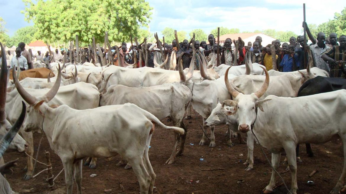 Northern Governors to adopt ranching